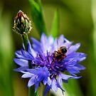 Blues For Pollen by Pamela Hubbard
