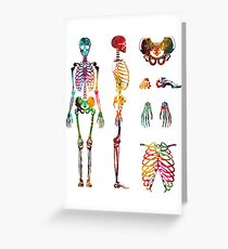 Human Body skeletal system Greeting Card