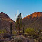 Cacti Saguaro by Alla Gill