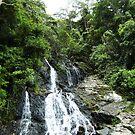Newell Falls - Dorrigo by Andrew Hakanson