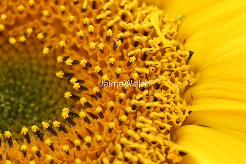 Sunflower by JaimeWalsh