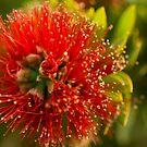 Bottle_Brush_1 by ChiaraLily