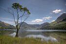 Lakeside Tree by SteveMG