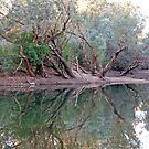 Reflections, Katherine River, Northern Territory, Australia by Adrian Paul