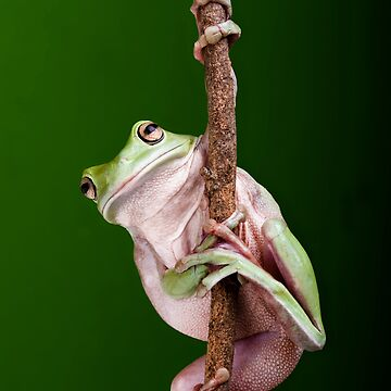 Pole Dancer by biawak