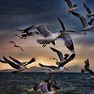 Flight Of The Seagulls by Gene Praag