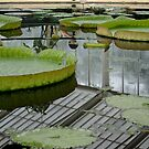 Water lilies by Julie Lebrun