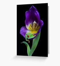 Red eyed tree frog resting in purple tulip Greeting Card