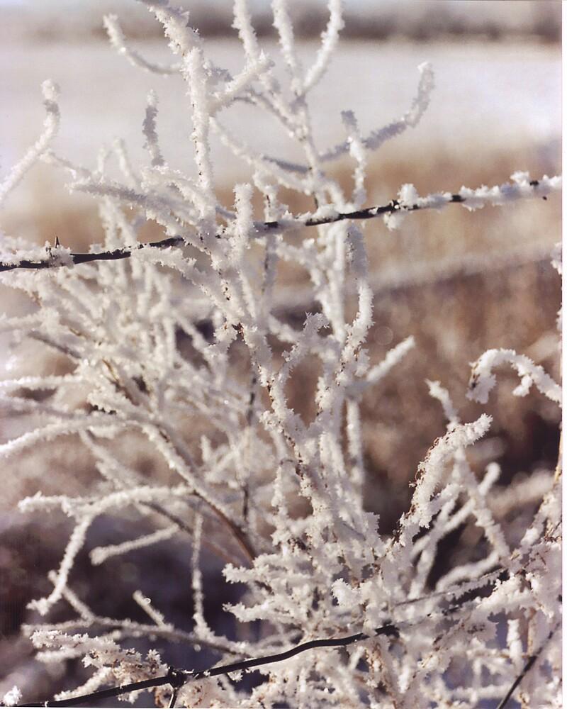 Winter Beauty by Paula Thompson