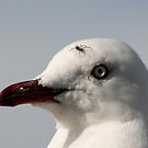 Seagull with passenger by Jennie Liebich