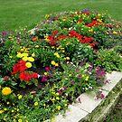 Flower Garden in My yard 1 by Linda Miller Gesualdo