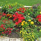 Flowers In My Garden 3 by Linda Miller Gesualdo