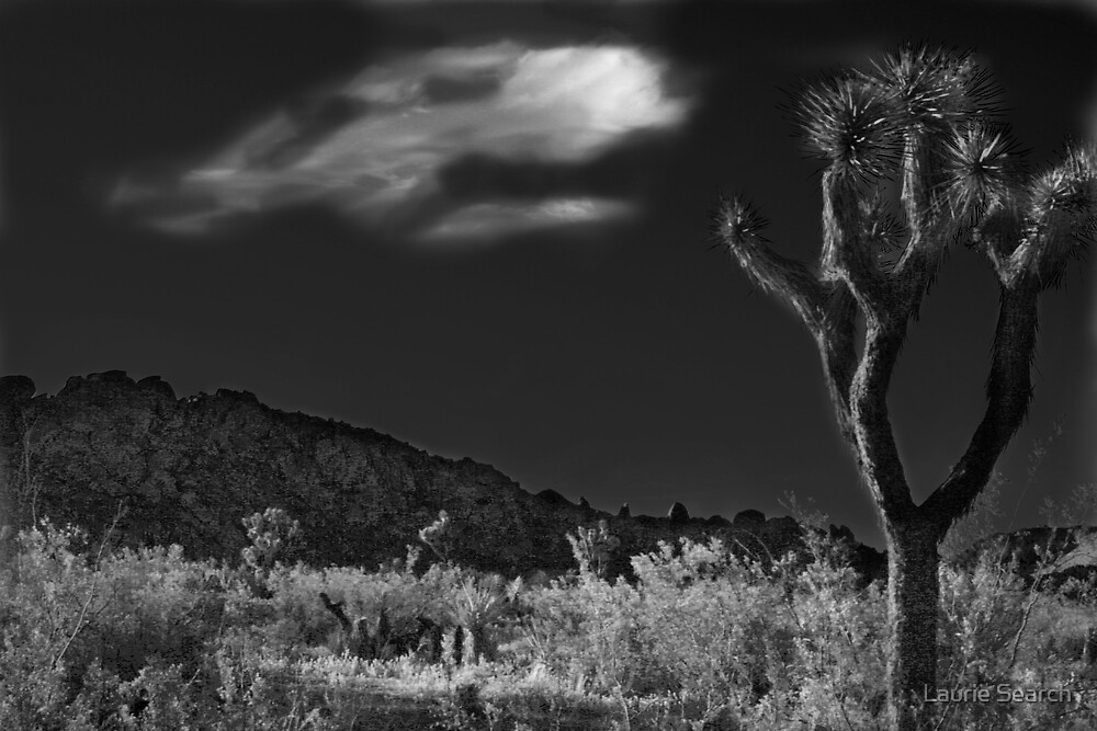 The Desert Knows by Laurie Search