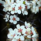 The Splendor of Spring by Stephen Thomas