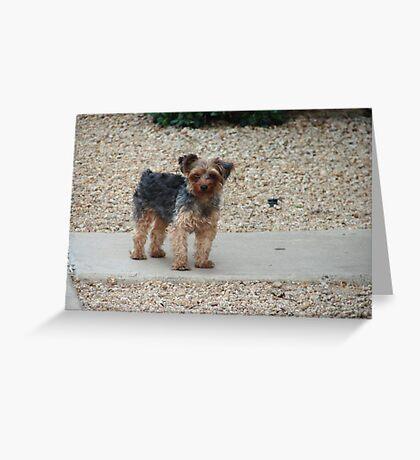Pretty Lil' Puppy Greeting Card