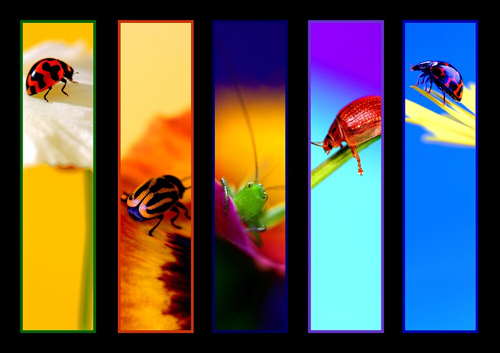 A Bug's World by Debbie Steer