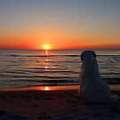 Ditte loves sunsets by Trine