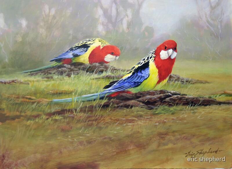 """Premise Indicator Words: """"Eastern Rosellas"""" Canvas Prints By Eric Shepherd"""