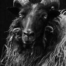 Sheep Portrait by Martina Cross
