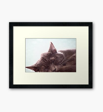 Sleeping Kitty Framed Print