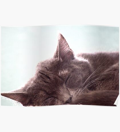Sleeping Kitty Poster