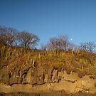 Cacti & Day Moon by Robert Gerard