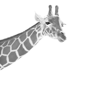 Giraffe Black & White Dream #1 #dreamy #decor #art  by anitabellajantz