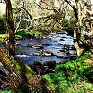 The River by Donna Chapman
