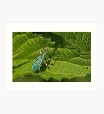 Turquiose Bug Art Print