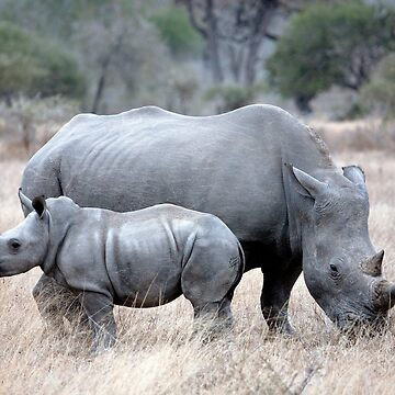 Mother And Baby Rhino by Mytmoss
