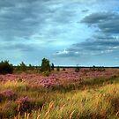Summer Fields by ienemien