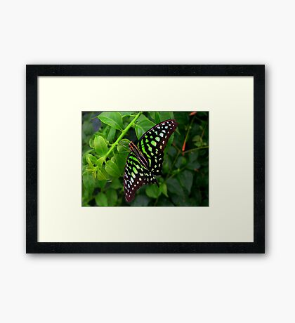 Butterfly in green Framed Print