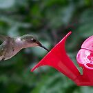 Mr. Hummingbird. by tserio