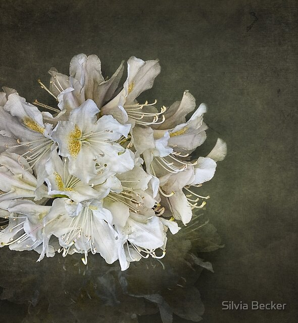 rhododendron by Silvia Becker