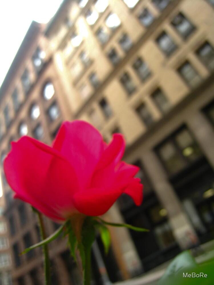 Bloom by MeBoRe