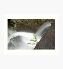 tiny fern, Mosquito Creek , British Columbia Art Print