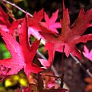 Burning leaves by iOpeners