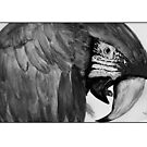 Parrot in Monochrome by Mark Young