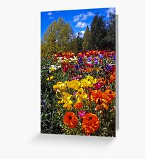 Spring Colour, Hobart Style Greeting Card