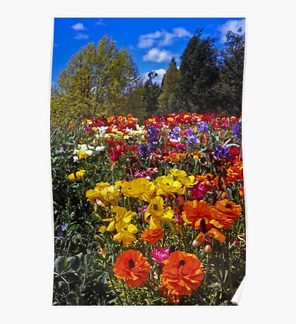 Spring Colour, Hobart Style Poster