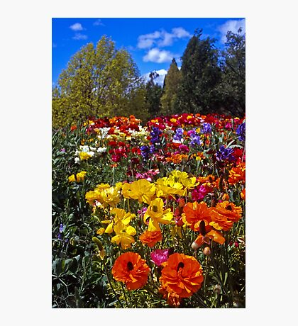 Spring Colour, Hobart Style Photographic Print