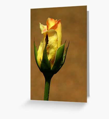 The Rose ~ Part Three Greeting Card