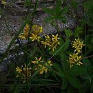 yellow flowers von Michael Hofmann