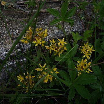 yellow flowers von Mows