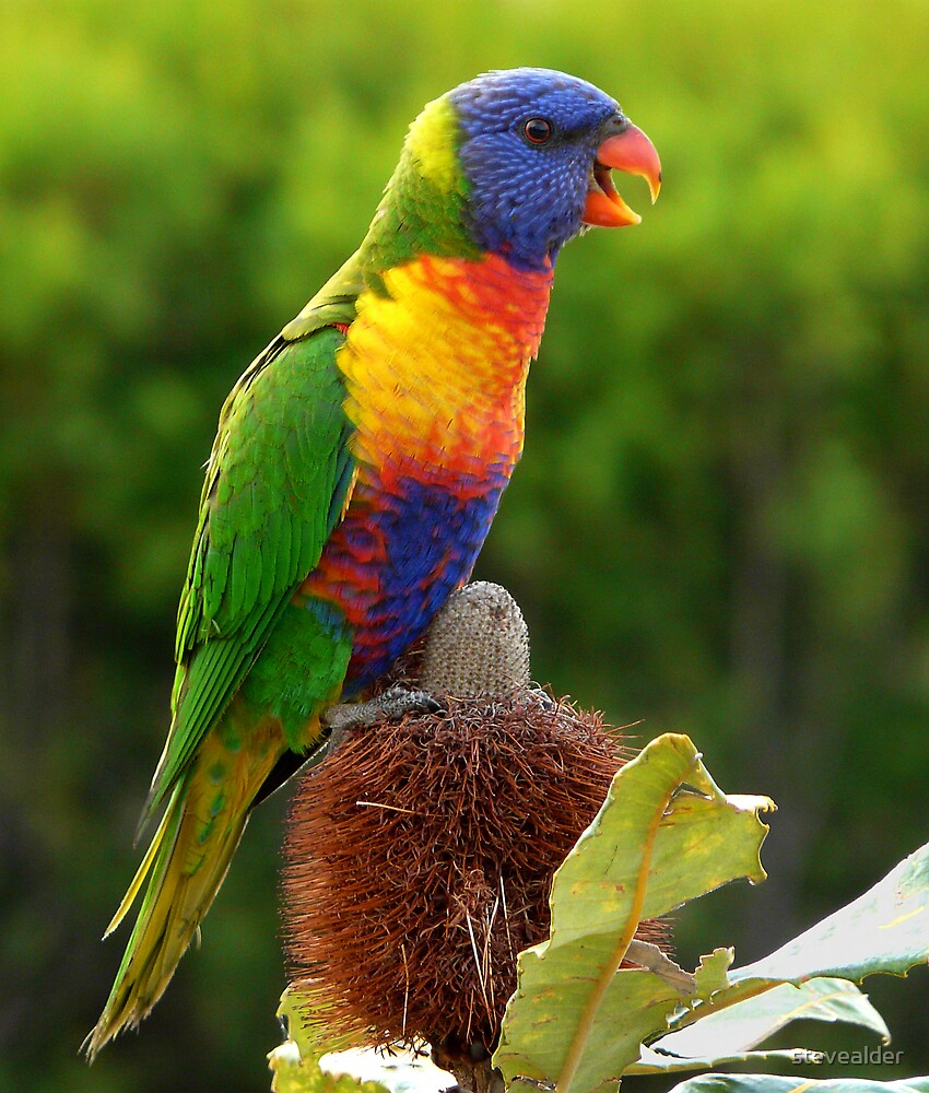 All The Colours Of The Rainbow by stevealder