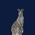 Kangaroo with joey looking out of pouch 4 by quentinjlang