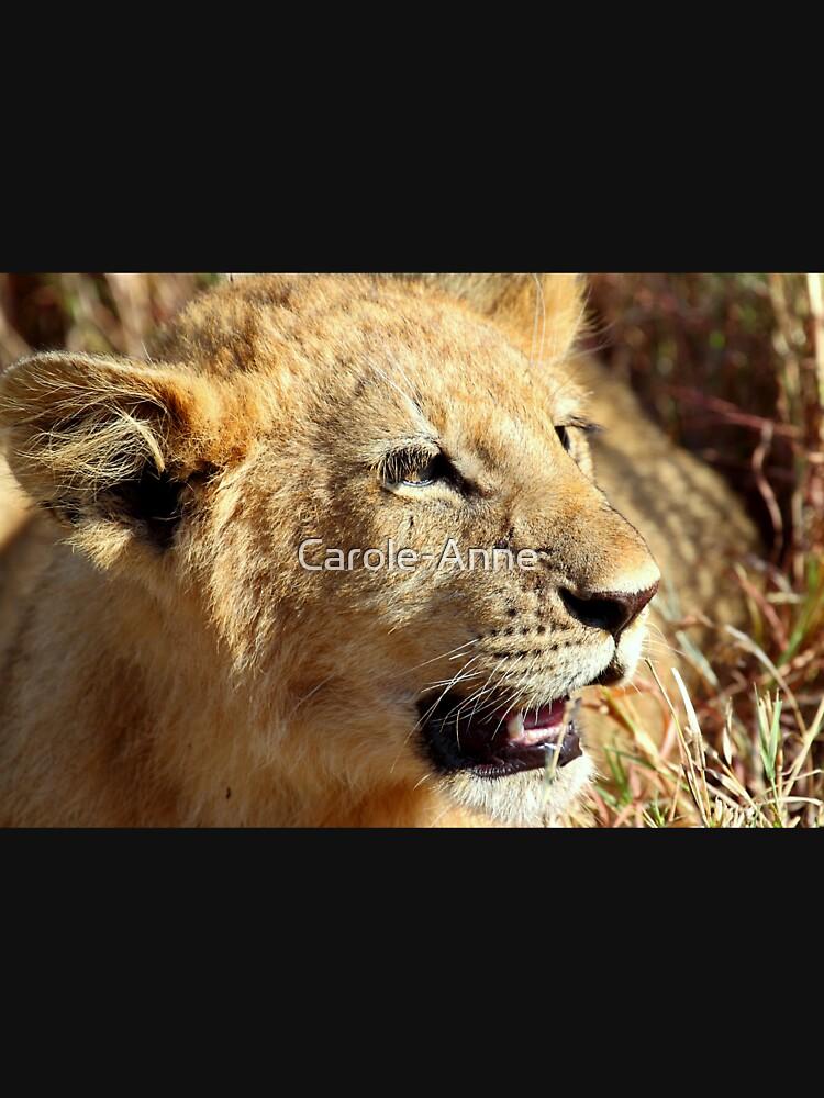 Closeup Lion Cub, Maasai Mara, Kenya  by Carole-Anne