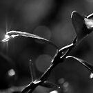 Gleam in Mono by Catherine Davis