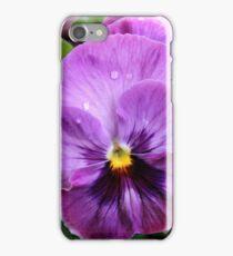 Spring Greetings - Pansies iPhone Case/Skin