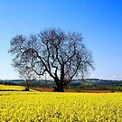 Field of gold. by naranzaria